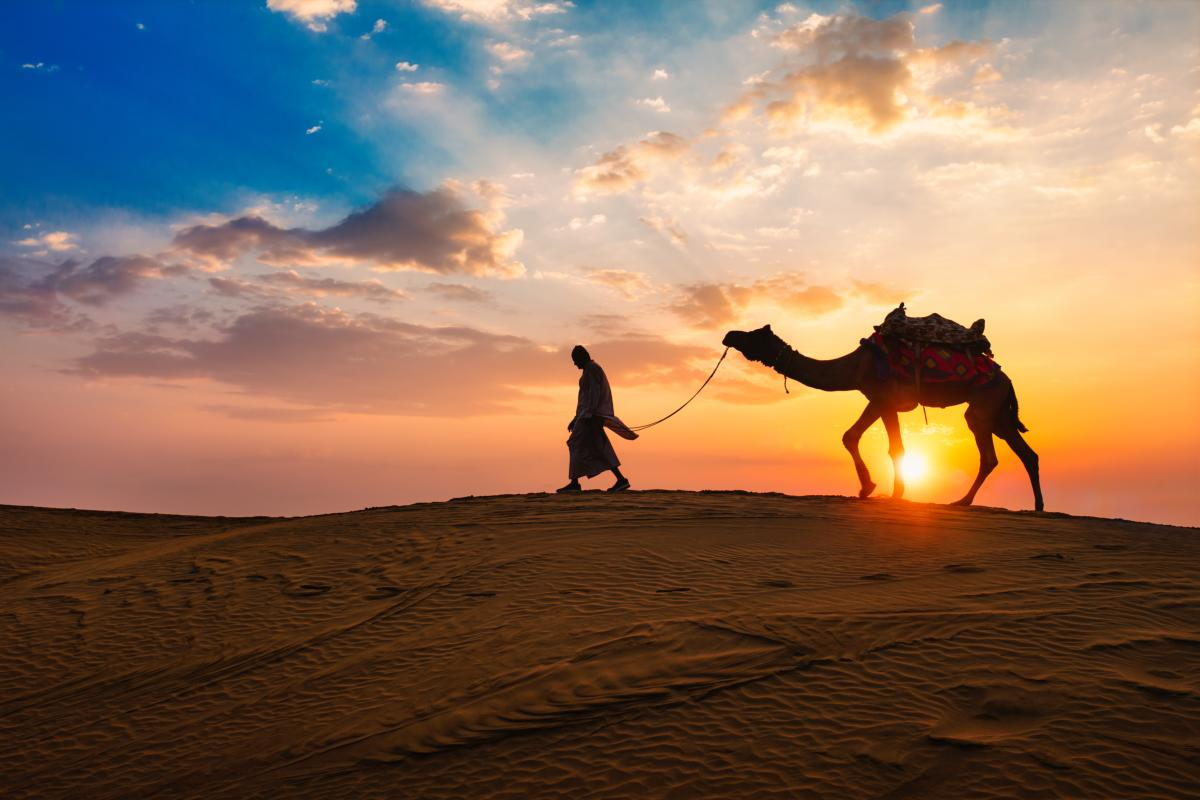 silhouettes de chameau dans les dunes au coucher du soleil